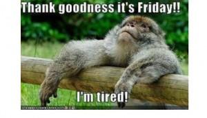 Friday gorilla