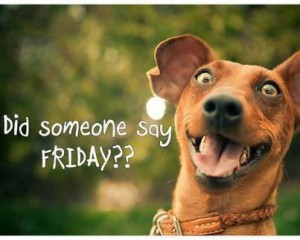 friday-funny-dog