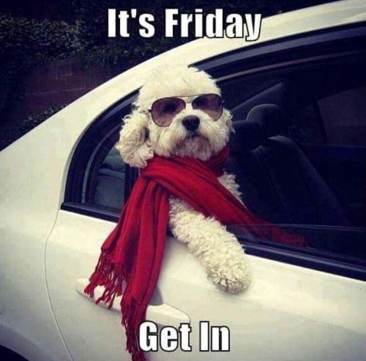 Funny Friday Dog Meme : Finally friday grammar goddess communication