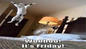 Friday cat jumping
