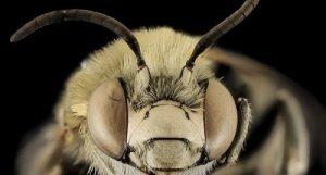 bugging me bugging you
